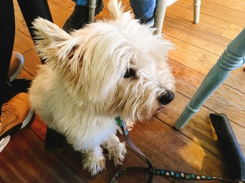 Dog friendly cafés